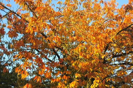 Herbst häkelmonster